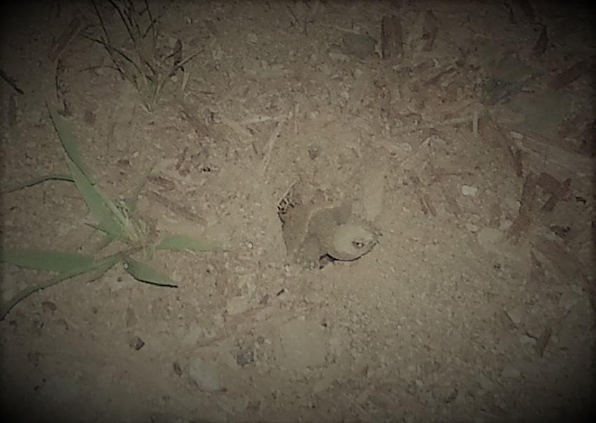 turtle-emerging.jpg